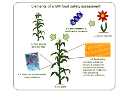 the genetic engineering of rice and its effects Use of biotechnology in agriculture— benefits and risks  this technology is called genetic engineering   use of biotechnology in agriculture--benefits and.